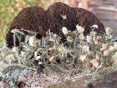 Mushroom-22