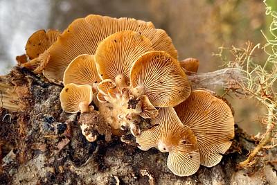 Mushroom-20