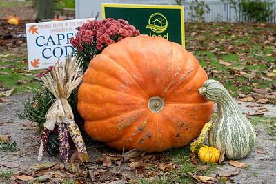 Pumpkin People 2020-1