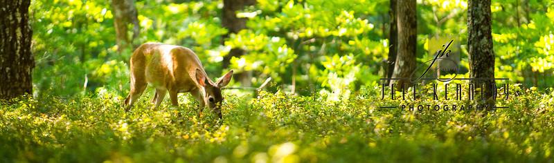 deer-12886 copy
