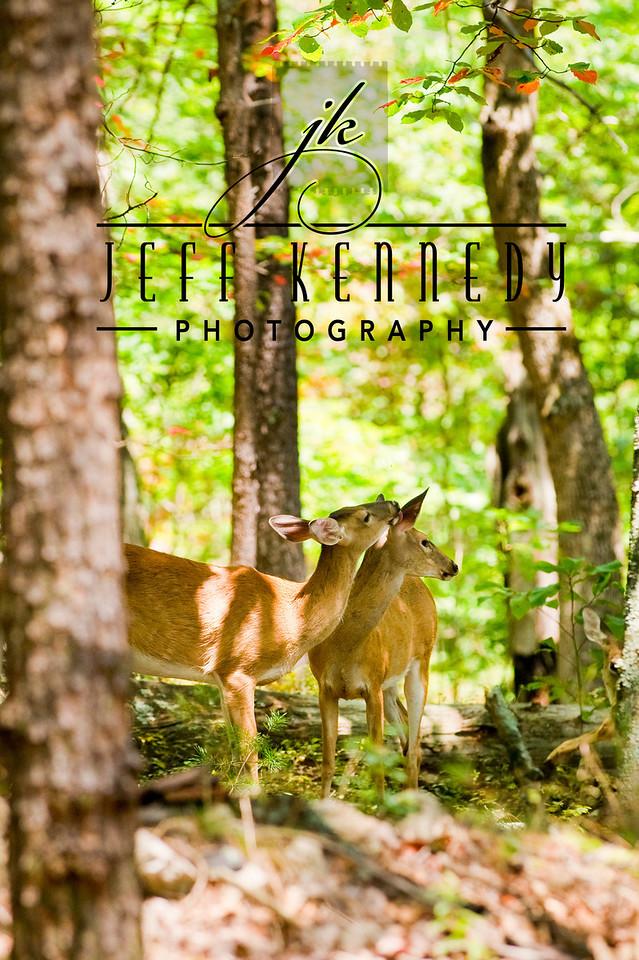 deer-12961 copy