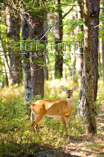 deer-12876 copy