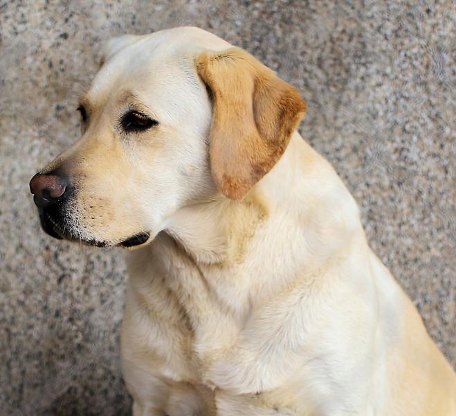 IMG_0052 Cheetah Best Friend Dog 1.31.2019.jpg