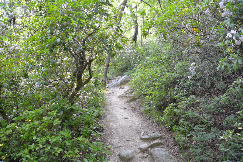 The trail to Pulpit Rock