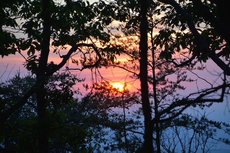 I took these as I started back on the trail back to the road.  Sunset through the trees.