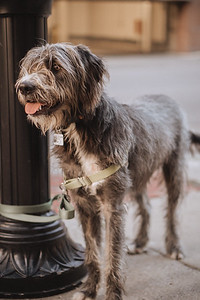 A dog stands next to an ornate lamp post on a city street.
