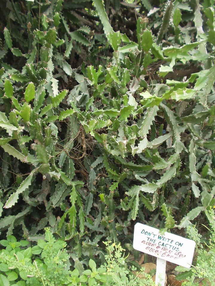 5 August: Cactus