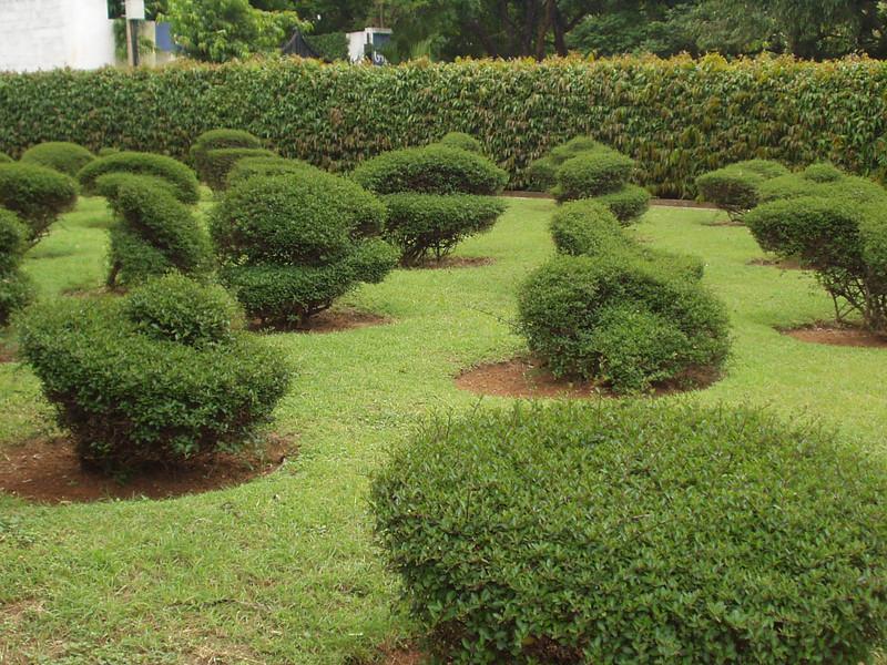 30 June: Garden
