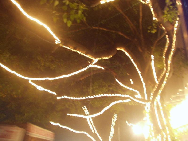 17 January: Tree