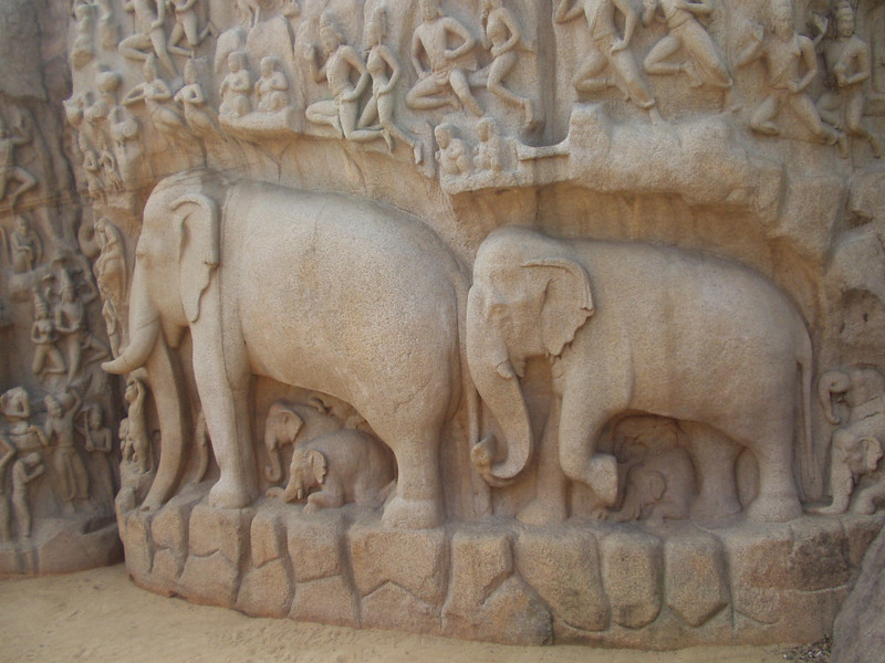 10 October: Elephants