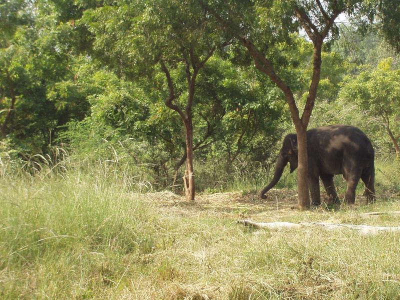 20 December: Elephant