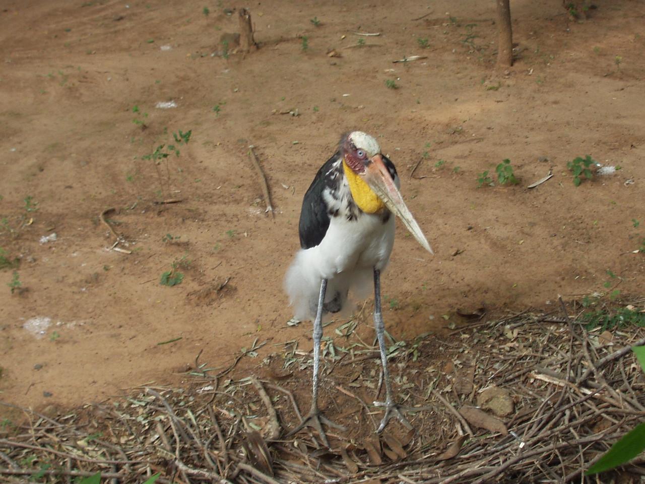 23 February: Stork