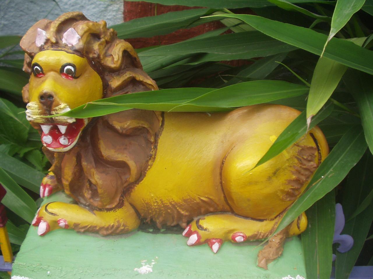 18 January: Lion