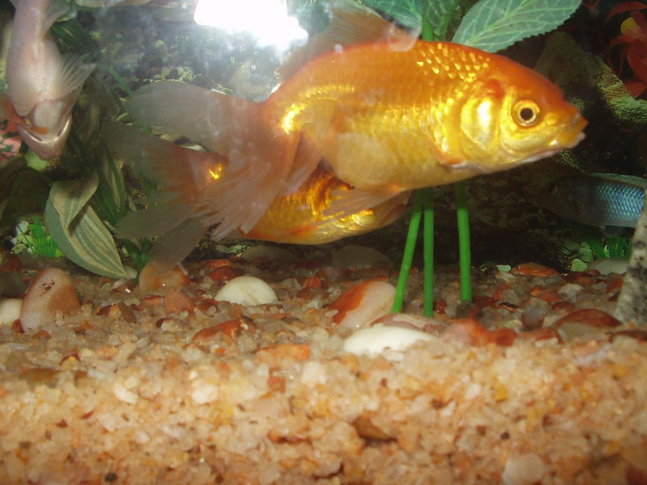 2 February: Fish