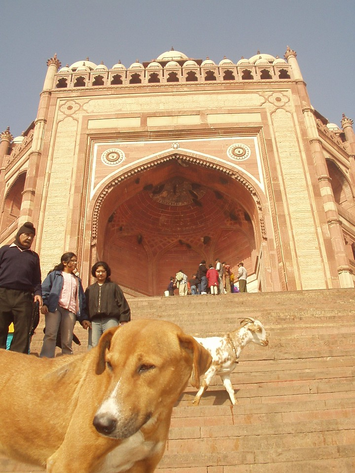 fatepur sikri  dog
