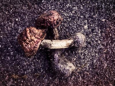 03 Mushrooms © David Bickerstaff
