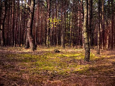 23 Chernobyl forest © David Bickerstaff
