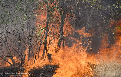 Firefighters backburn to try and keep fire from crossing Cherokee Road below the Wildflower viewing area on the Oroville side Monday Oct. 9, 2017. (Bill Husa -- Enterprise-Record)