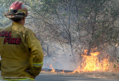 CAL FIRE Butte County Captain John Jessen keeps an eye on the fire as firefighters backburn to try and keep fire from crossing Cherokee Road below the Wildflower viewing area on the Oroville side Monday Oct. 9, 2017. (Bill Husa -- Enterprise-Record)