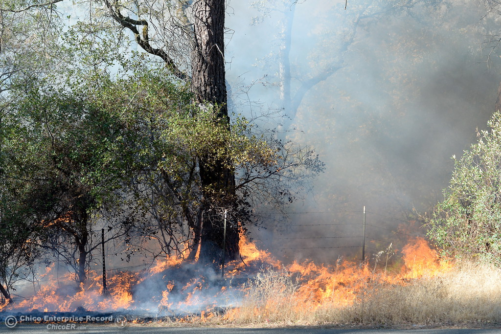 . Firefighters backburn to try and keep fire from crossing Cherokee Road below the Wildflower viewing area on the Oroville side Monday Oct. 9, 2017. (Bill Husa -- Enterprise-Record)