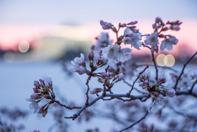 Sunrise, March 19