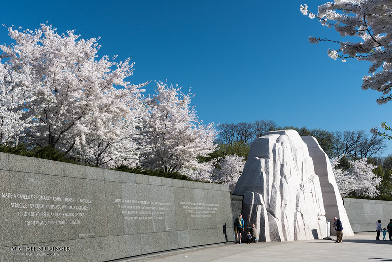 Cherry blossoms and the Martin Luther King, Jr. Memorial in West Potomac Park in Washington, D.C. during peak bloom.