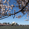 Classic view of the Jefferson Memorial at the Tidal Basin, Washington, DC, April 4, 2009.