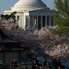 At the Tidal Basin, Washington, DC, April 4, 2009. Jefferson Memorial looms behind.
