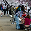 Enjoying the cherry blossoms at the Tidal Basin, Washington DC, April 11, 2013.