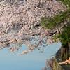 Enjoying the cherry blossoms at the Tidal Basin, Washington DC, April 11, 2013.