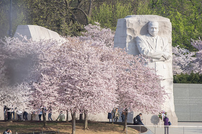 Quiet moment at the MLK Memorial