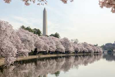 At the Tidal Basin in Washington, DC, April 4, 2019.