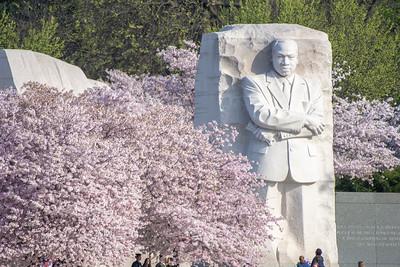 MLK in springtime