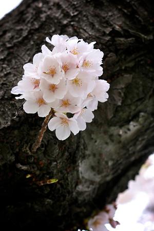 Blooms_2377164341_o