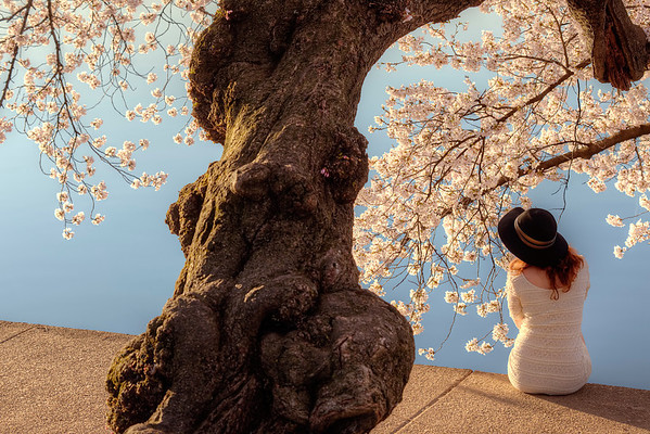 Cherry Blossom Lady