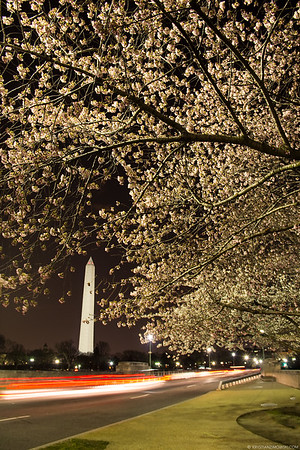 Blossoms by Night
