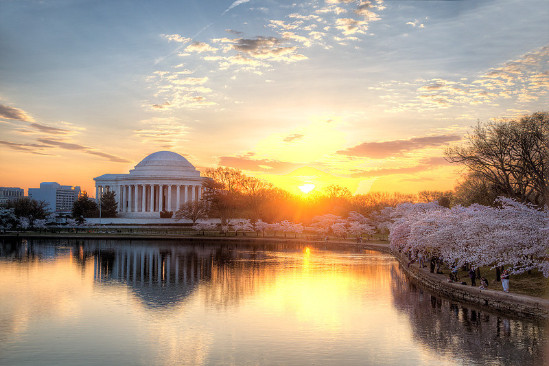 The Jefferson Memorial and Cherry Blossoms