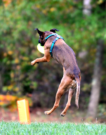 Chesapeake Disc Dogs October 2017