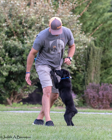 Chesapeake Disc Dogs August  25, 2018