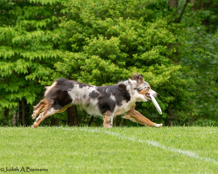 Chesapeake Disc Dogs Club, May 2018-5101