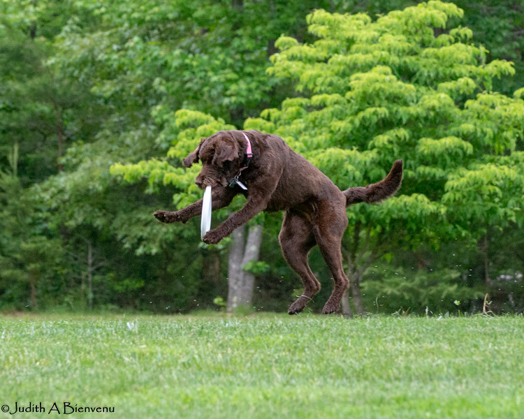 Chesapeake Disc Dogs Club, May 2018-5056
