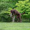 Chesapeake Disc Dogs Club, May 2018-5056