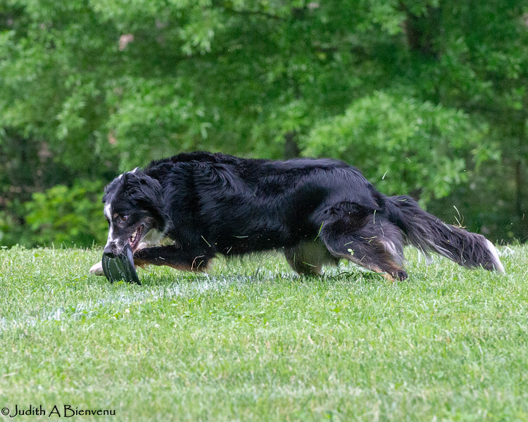 Chesapeake Disc Dogs Club, May 2018-5134