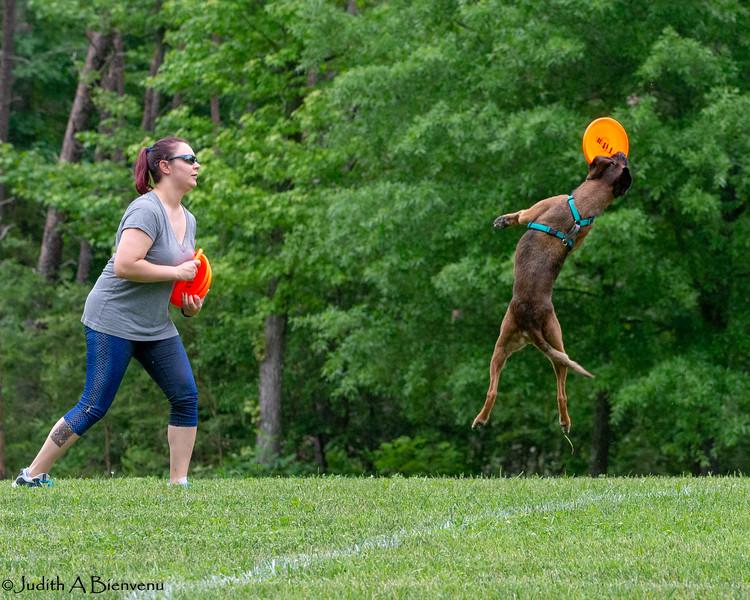 Chesapeake Disc Dogs Club, May 2018-5142