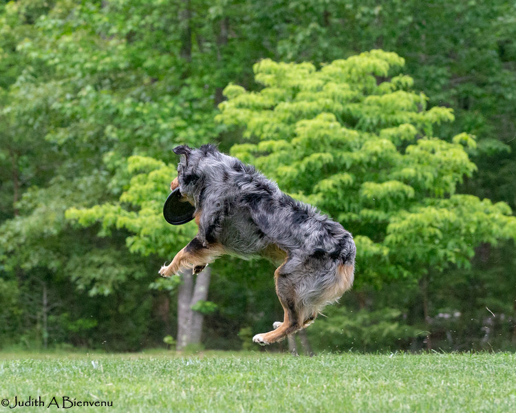 Chesapeake Disc Dogs Club, May 2018-5079