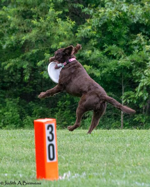 Chesapeake Disc Dogs Club, May 2018-5068