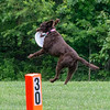 Chesapeake Disc Dogs Club, May 2018-5068