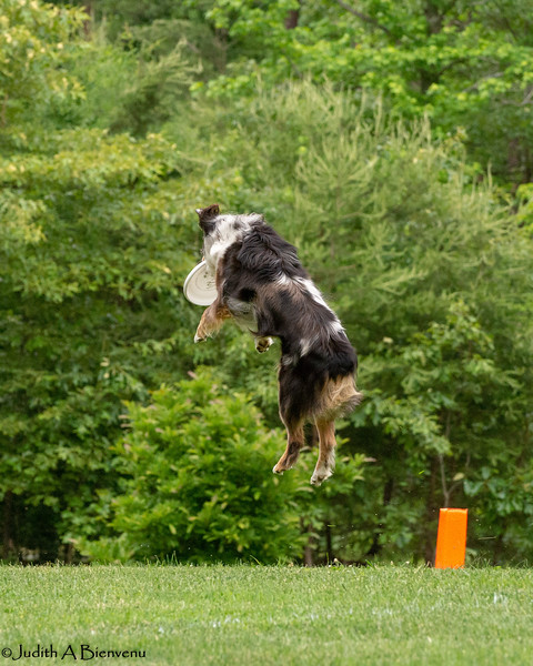 Chesapeake Disc Dogs Club, May 2018-5102