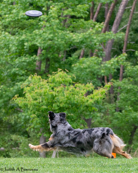 Chesapeake Disc Dogs Club, May 2018-5077