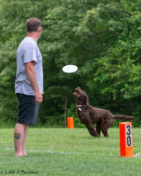 Chesapeake Disc Dogs Club, May 2018-5060